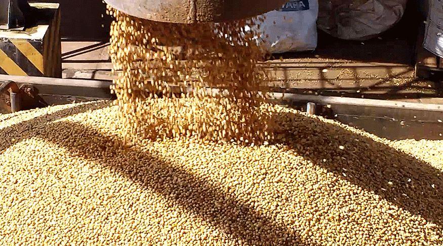A safra de soja é estimada em 20,2 milhões de toneladas